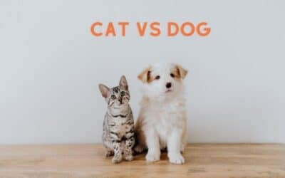 Cat vs. Dog, what are the differences?