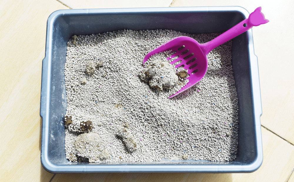 A stinky litter box filled with poop