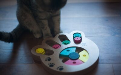 A puzzle feeder with treats