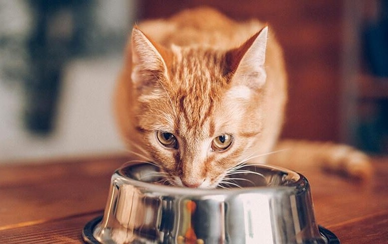 A cat eating a meal from a bowl