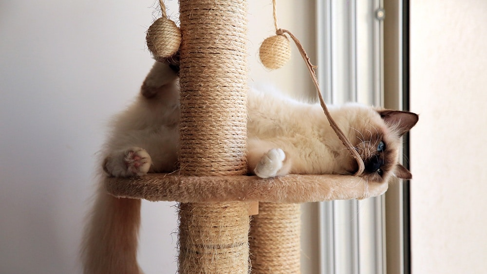 A cat sleeping tightly on a scratching tree