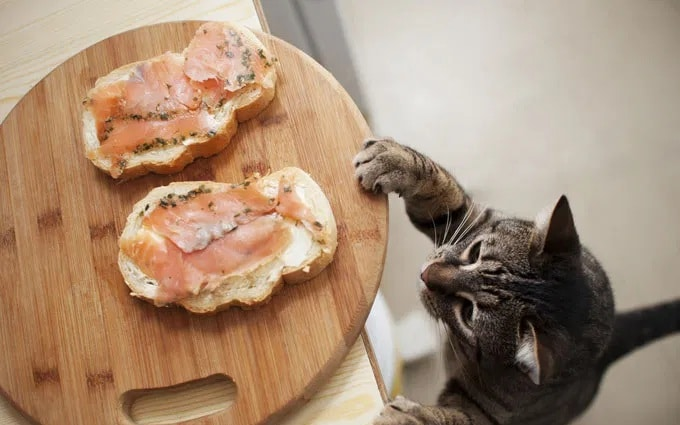A cat reaching from a plate with salmon snacks