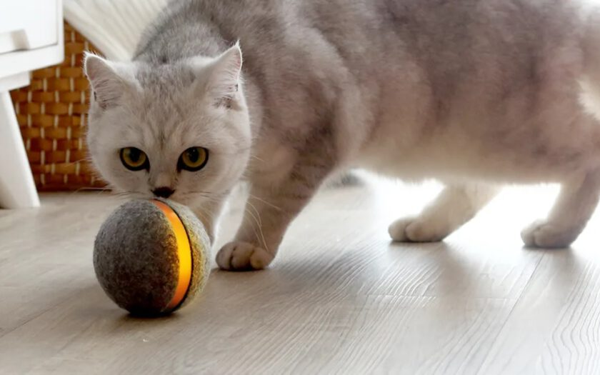 A cat playing with a magic ball