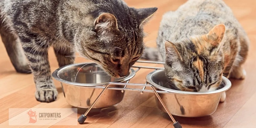 Two cats eating from their food bowl