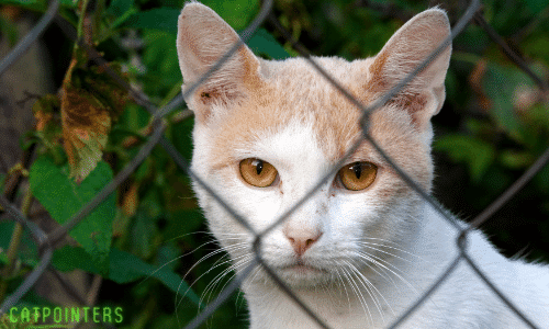 A sad looking cat watching from behind a fence