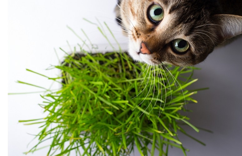 This cat doesn't seem to understand the benefits of cat grass