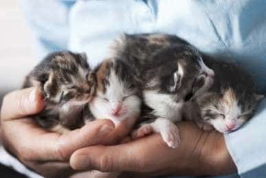 A person holding four little kittens in his hands
