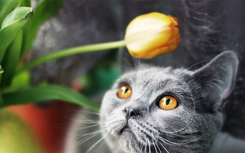 A cat looking at a flower