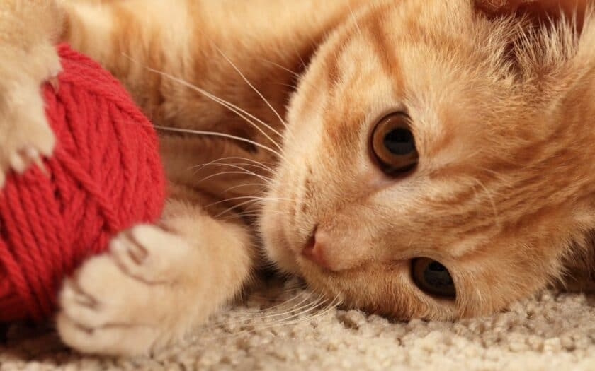 A kitten playing with some rope