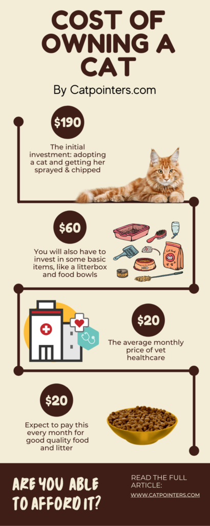 Infographic that shows all the various costs involved for keeping a cat