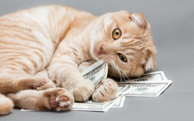 A cat playing with dollar bills