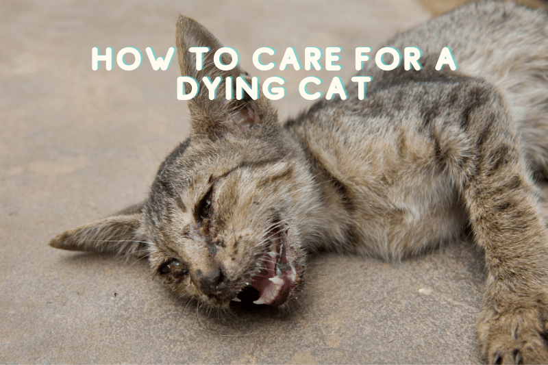 A picture of a dying cat