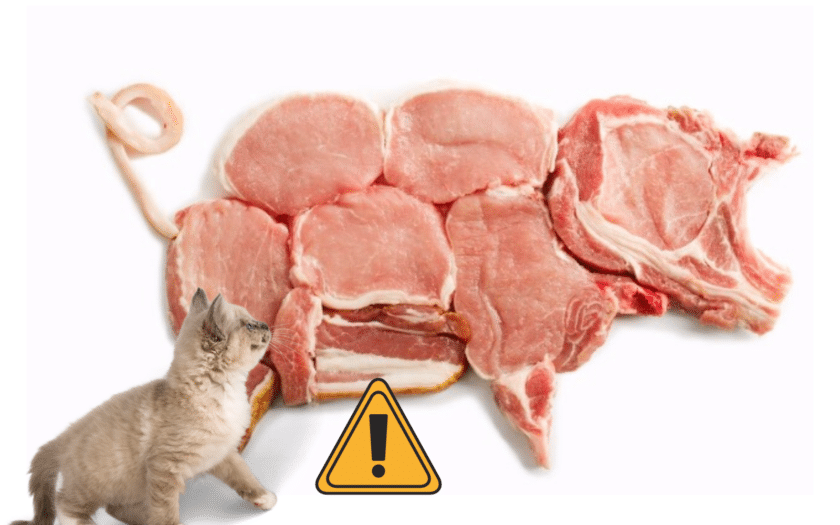 A cat looking at a pig made of meat