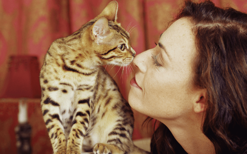 tabby cat sniffing woman's nose