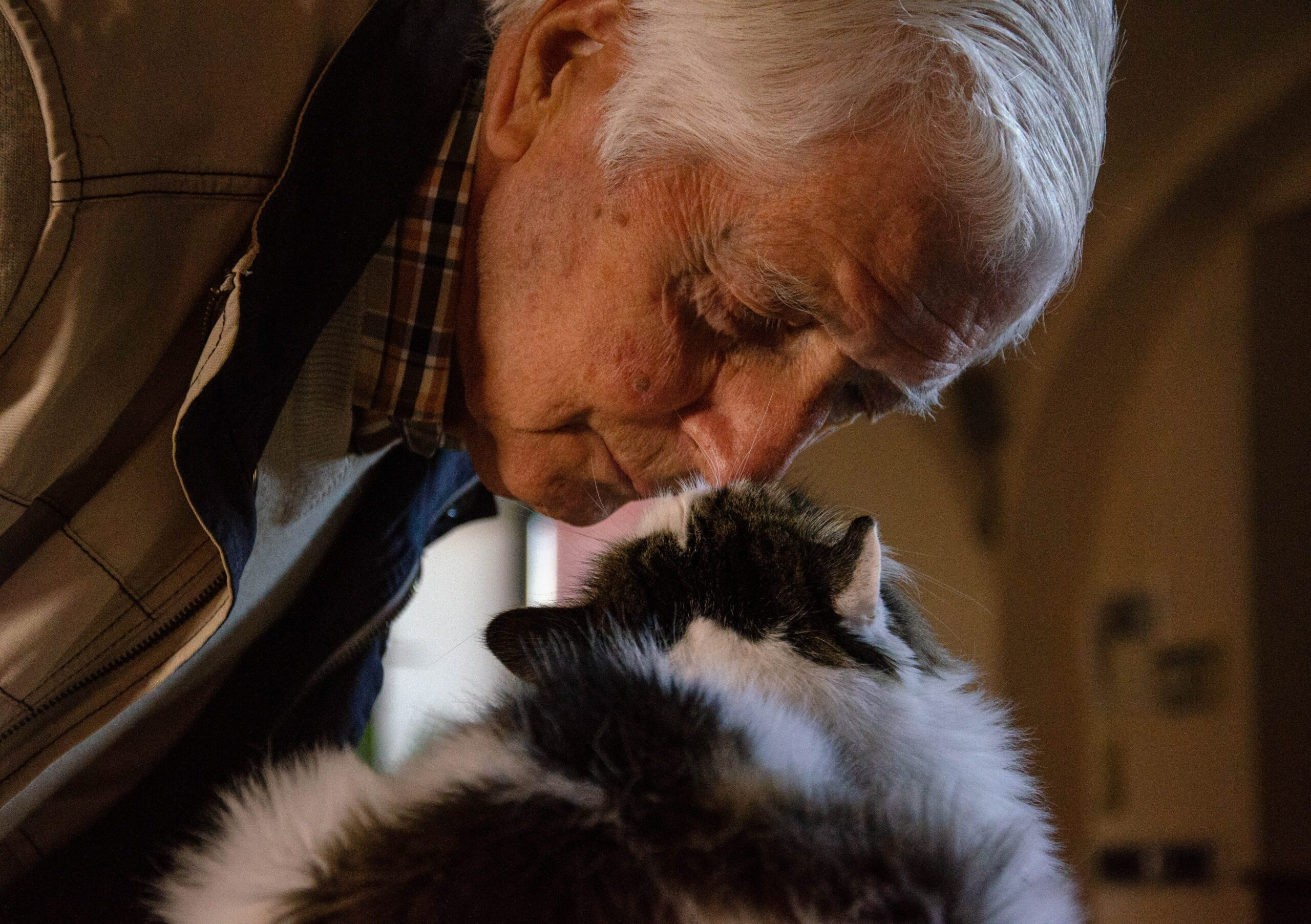 Benefits of catsBenefits of Cats for Old People