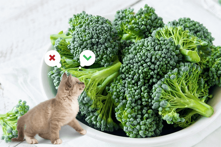 A cat looking at a bowl of cooked broccoli sprouts
