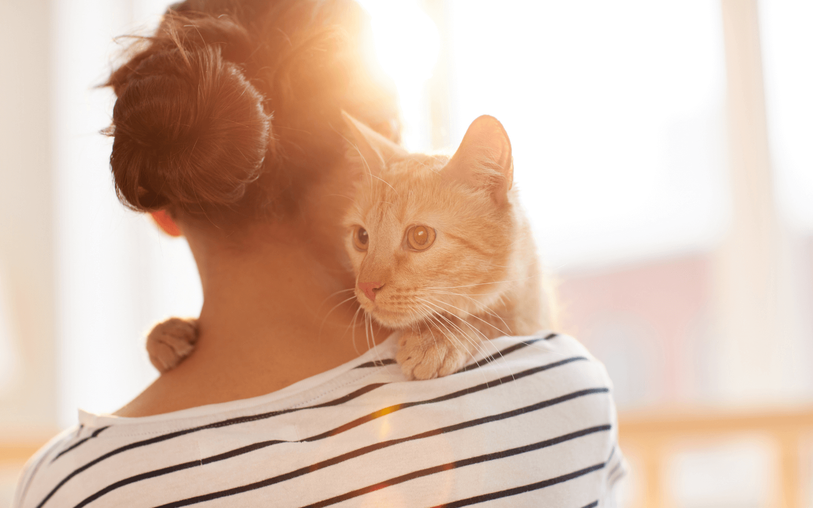 A woman in stripes hugs a ginger cat to say sorry