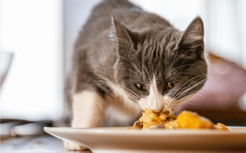 cat eating potatoes from a dinner plate
