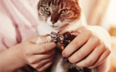 Orange cat getting nails trimmed with a nail clipper
