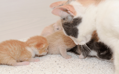 cat-with-kittens-why-do-cats-eat-kittens