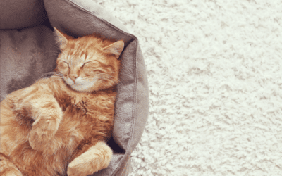 ginger cat lying on back in grey bed - do cats sleep at night?