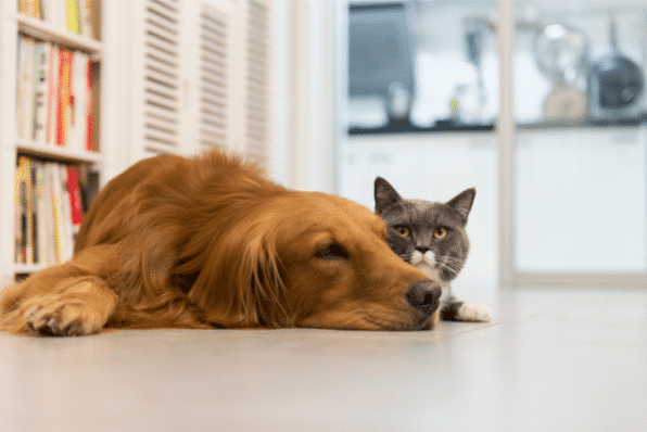 Multiple pets need to be treated at the same time