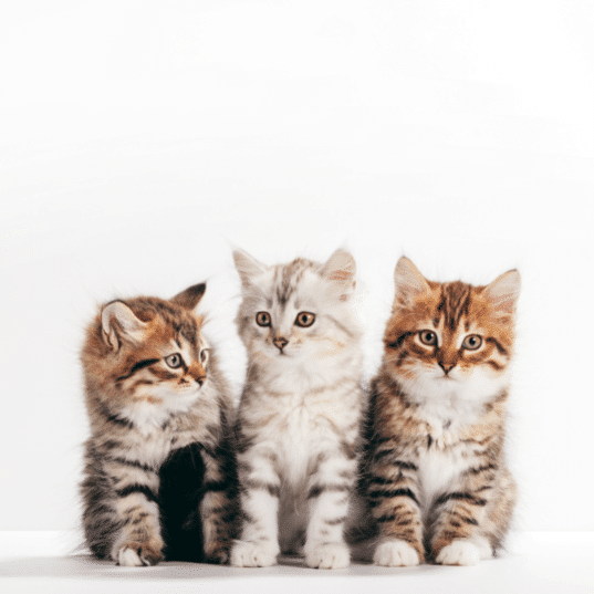 Three kittens from the same litter. Will they recognize eachother?