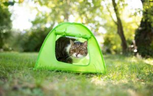 A cat in a green tent outside