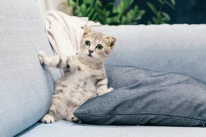 Destructive Scratching: How to Keep Cats Off Your Furniture