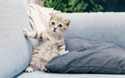 A grey kitten on a grey sofa, owner is wondering how to keep cats off the furniture